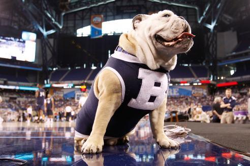 Butler Blue II, mascotte dell'Università di Butler, che quest'anno non sarà al Gran Ballo